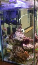 立ち上げた海水魚水槽
