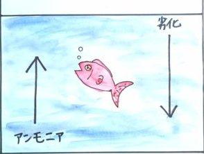水槽内のアンモニアや劣化した海水で弱っている魚の絵