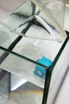 プラケース小から魚(イメージ)がトリートメント水槽に完全に移った状態