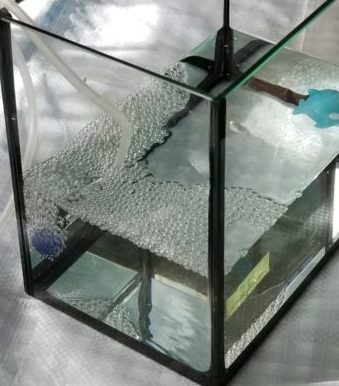 トリートメント海水2ℓに飼育海水1ℓと魚(イメージ)