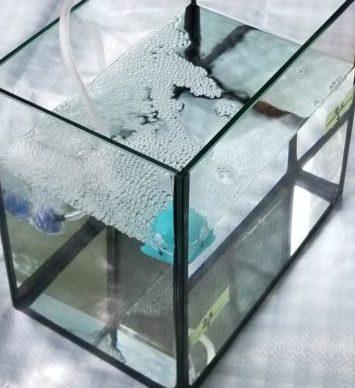 トリートメント海水2ℓに飼育海水が3ℓと魚(イメージ)