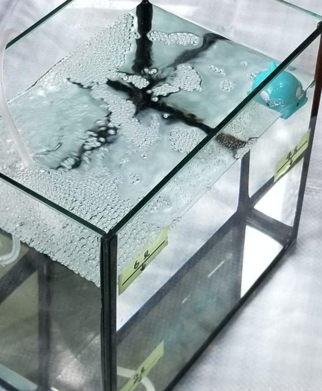 トリートメント海水2ℓに飼育海水4ℓの水合わせ中の魚(イメージ)