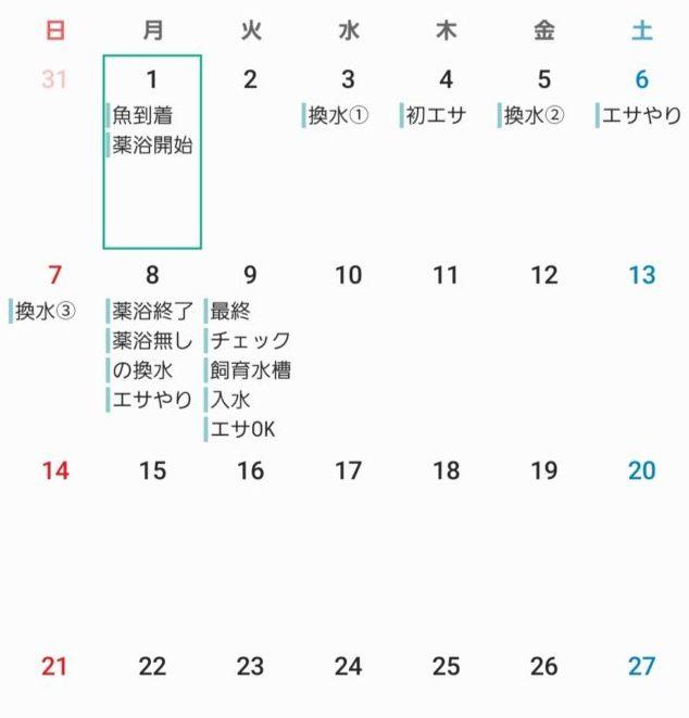 仮に作ったトリートメント日程カレンダー換水とエサやり