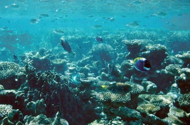 海中の珊瑚礁